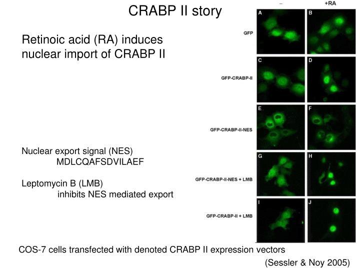 CRABP II story