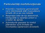 particularit i morfofunc ionale3