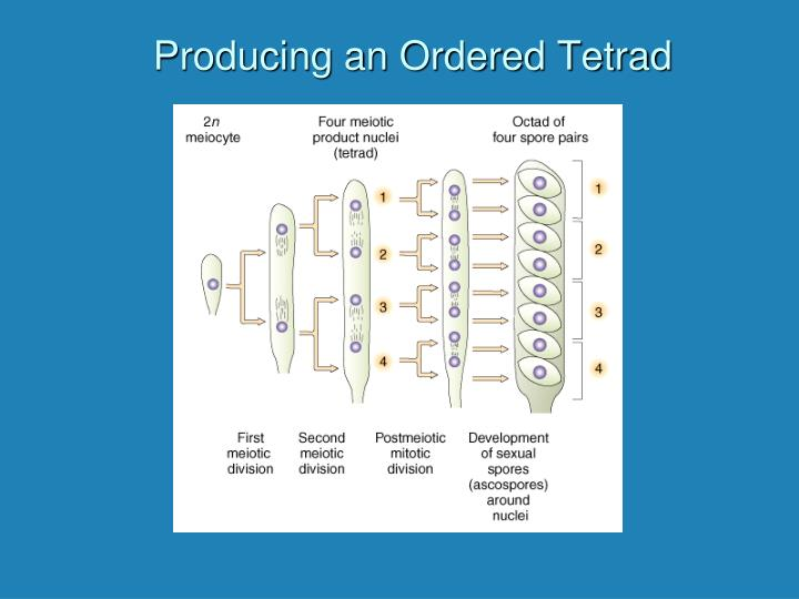 Producing an Ordered Tetrad