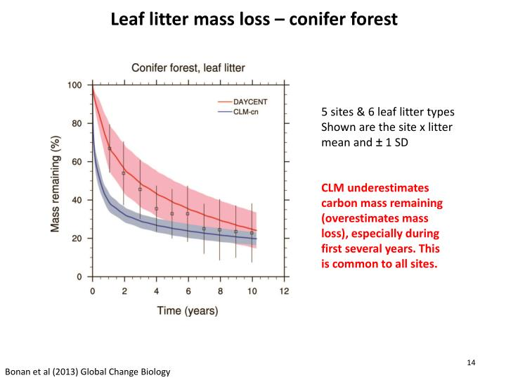 Leaf litter mass loss – conifer forest