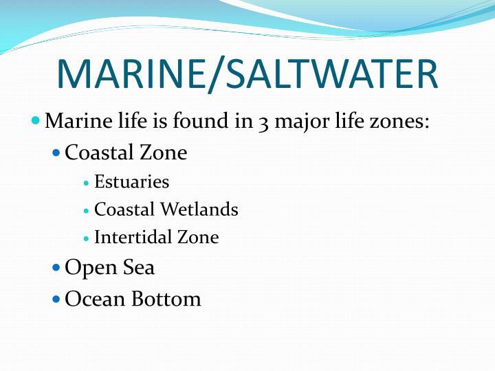 MARINE/SALTWATER