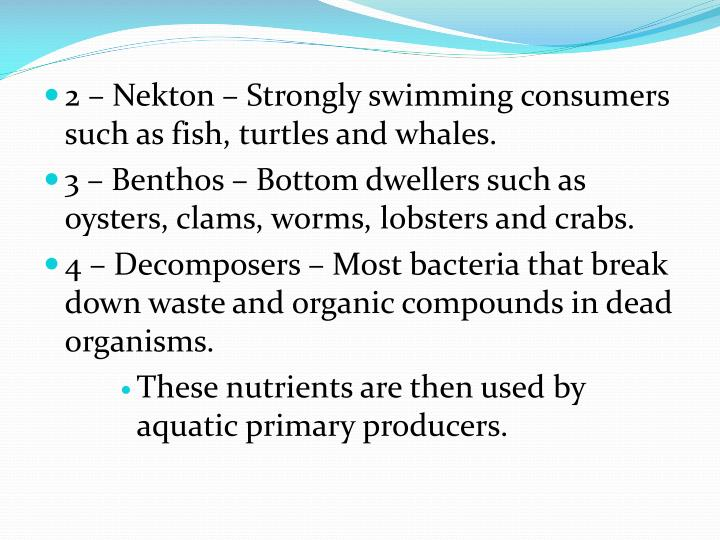 2 – Nekton – Strongly swimming consumers such as fish, turtles and whales.