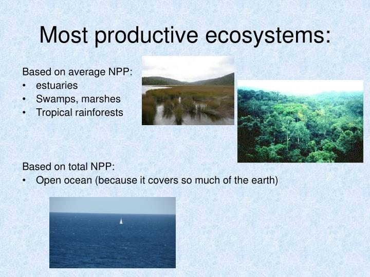 Most productive ecosystems: