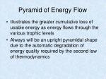 pyramid of energy flow