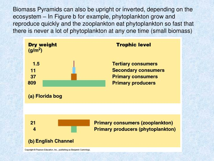 Biomass Pyramids can also be upright or inverted, depending on the ecosystem – In Figure b for example, phytoplankton grow and reproduce quickly and the zooplankton eat phytoplankton so fast that there is never a lot of phytoplankton at any one time (small biomass)