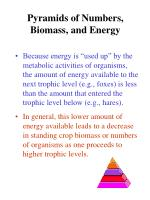 pyramids of numbers biomass and energy