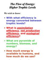 the flow of energy higher trophic levels