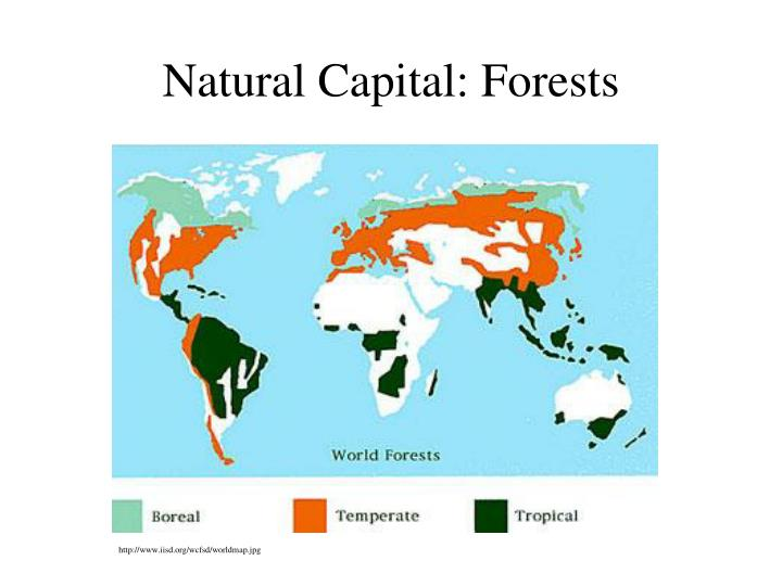 Natural Capital: Forests