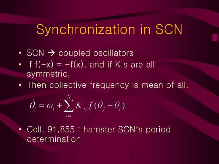 Synchronization in SCN