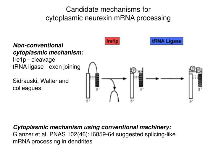 Candidate mechanisms for