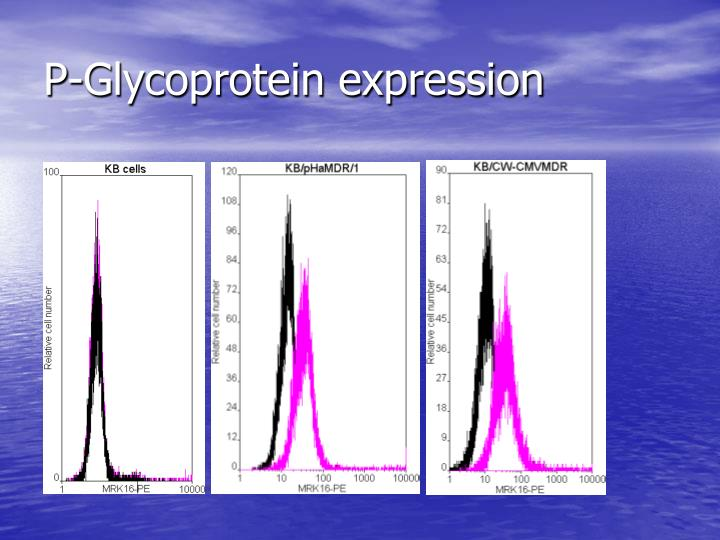 P-Glycoprotein expression