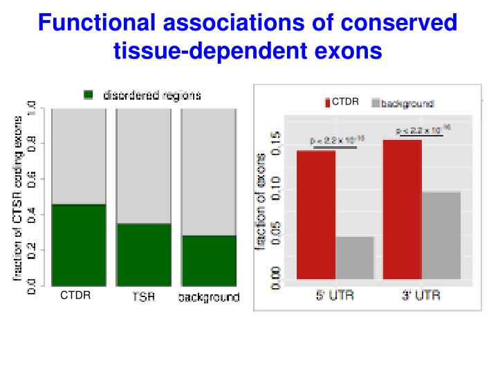 Functional associations of conserved tissue-dependent exons