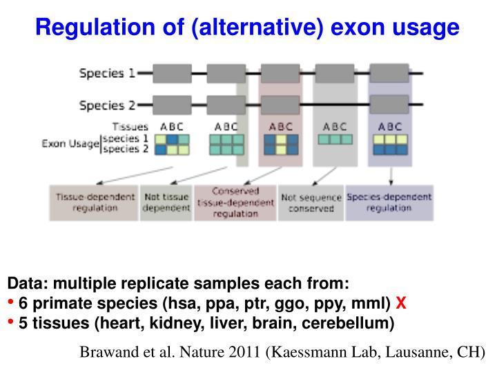Regulation of (alternative) exon usage