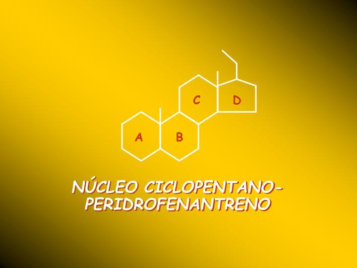 NÚCLEO CICLOPENTANO-PERIDROFENANTRENO