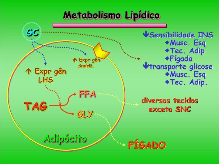 Metabolismo Lipídico