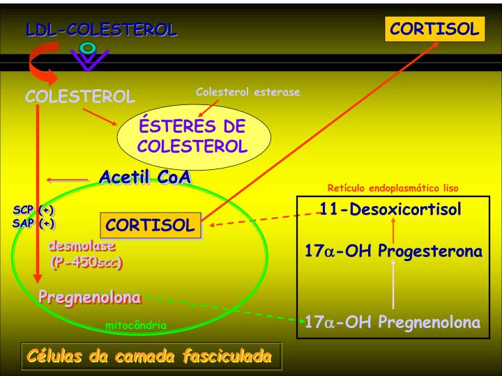 LDL-COLESTEROL