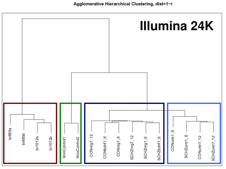 Illumina 24K