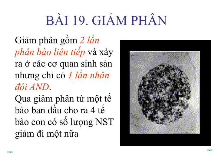 BÀI 19. GIẢM PHÂN
