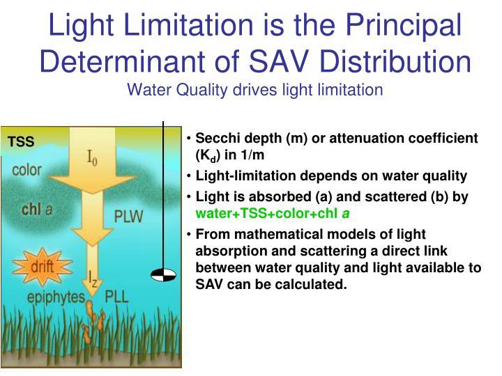 Secchi depth (m) or attenuation coefficient (K