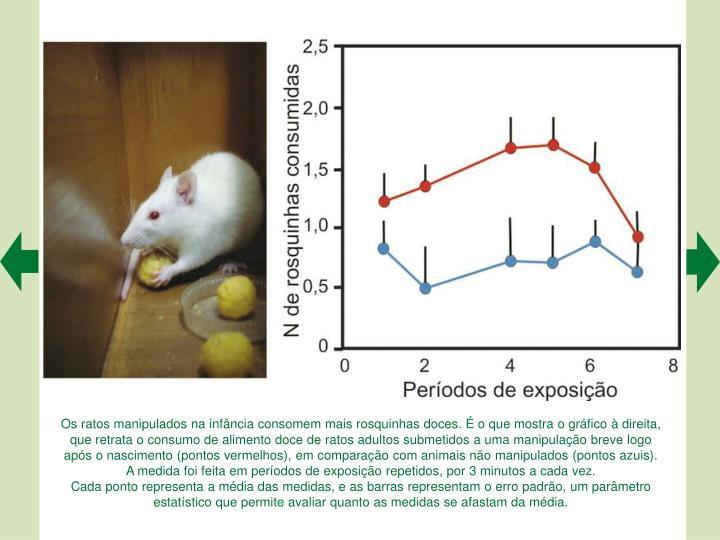 Os ratos manipulados na infância consomem mais rosquinhas doces. É o que mostra o gráfico à direita, que retrata o consumo de alimento doce de ratos adultos submetidos a uma manipulação breve logo após o nascimento (pontos vermelhos), em comparação com animais não manipulados (pontos azuis).