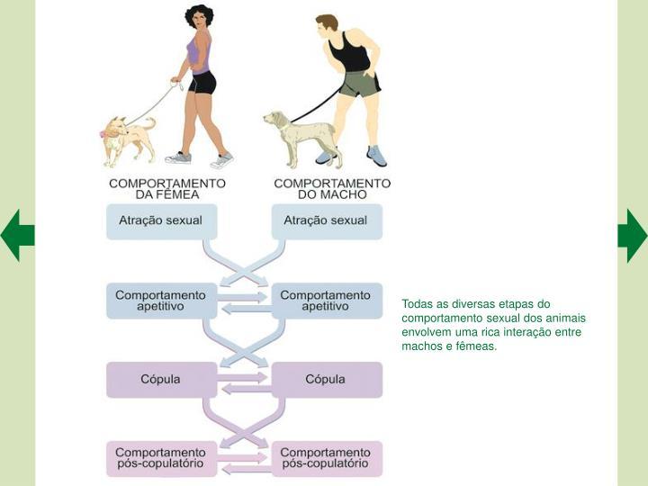 Todas as diversas etapas do comportamento sexual dos animais envolvem uma rica interação entre machos e fêmeas.