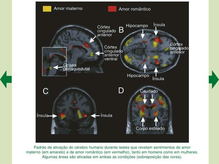 Padrão de ativação do cérebro humano durante testes que revelam sentimentos de amor