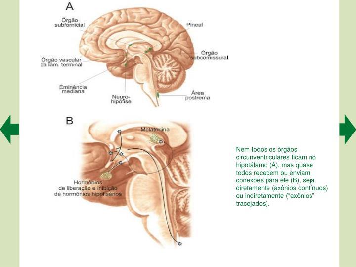 """Nem todos os órgãos circunventriculares ficam no hipotálamo (A), mas quase todos recebem ou enviam conexões para ele (B), seja diretamente (axônios contínuos) ou indiretamente (""""axônios"""""""