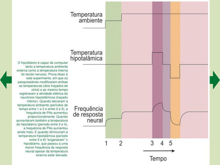 O hipotálamo é capaz de computar tanto a temperatura ambiente externa como a temperatura interna do tecido nervoso. Prova disso é este experimento, em que os pesquisadores modificaram ambas