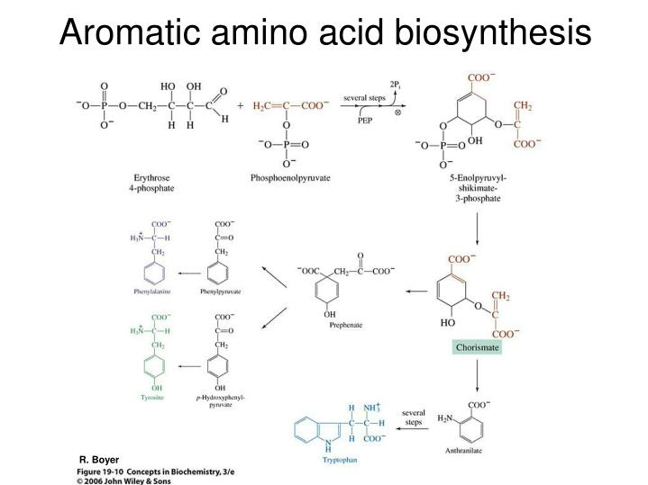 Aromatic amino acid biosynthesis