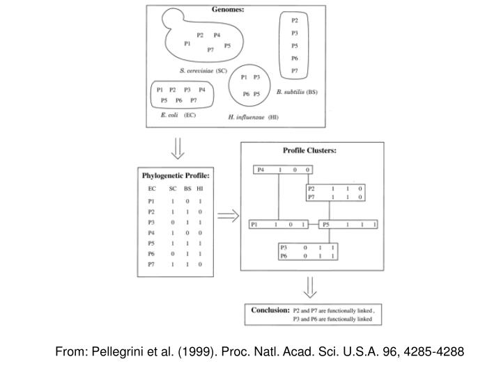 From: Pellegrini et al. (1999). Proc. Natl. Acad. Sci. U.S.A. 96, 4285-4288