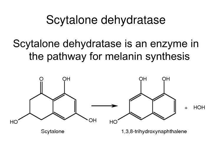Scytalone dehydratase