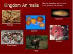 kingdom animalia1