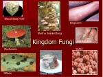kingdom fungi1