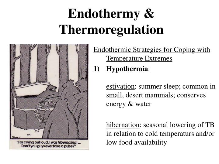 Endothermy & Thermoregulation