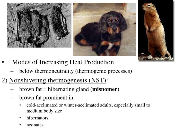 Modes of Increasing Heat Production