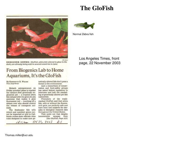 The GloFish
