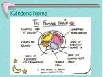 kvindens hjerne