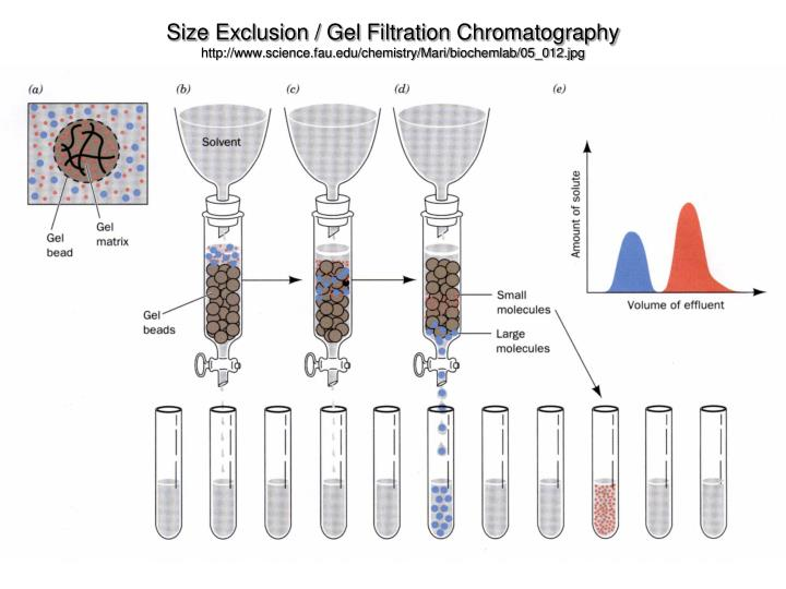 Size Exclusion / Gel Filtration Chromatography
