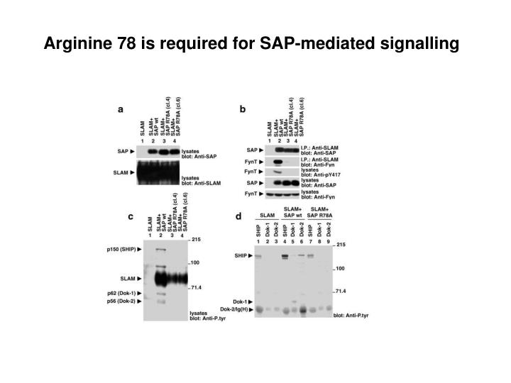 Arginine 78 is required for SAP-mediated signalling