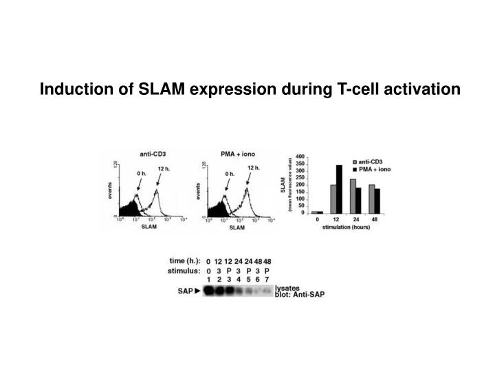 Induction of SLAM expression during T-cell activation