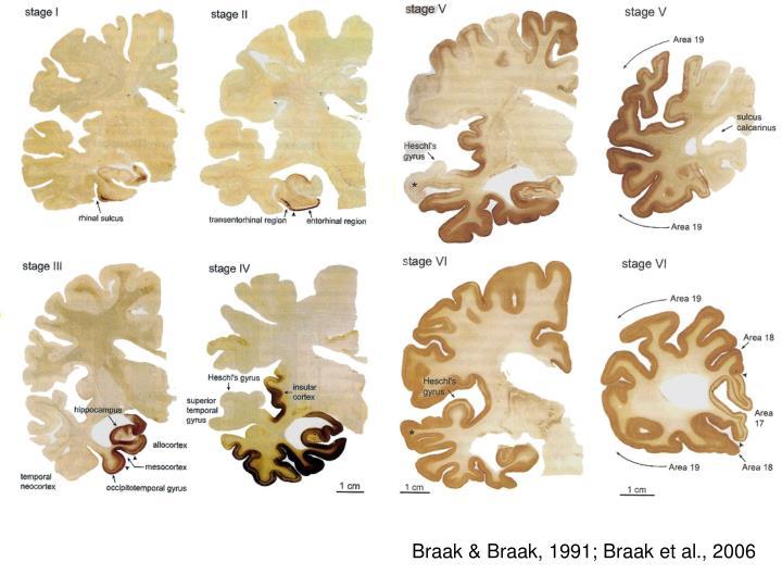 Braak & Braak, 1991; Braak et al., 2006