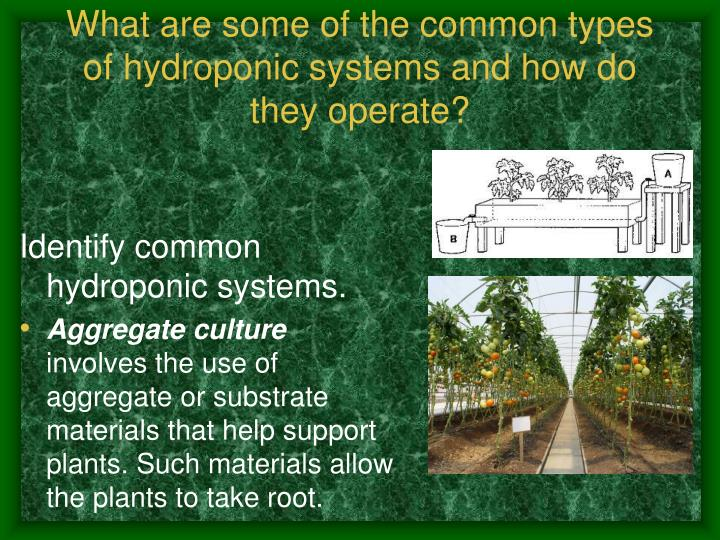 What are some of the common types of hydroponic systems and how do they operate?
