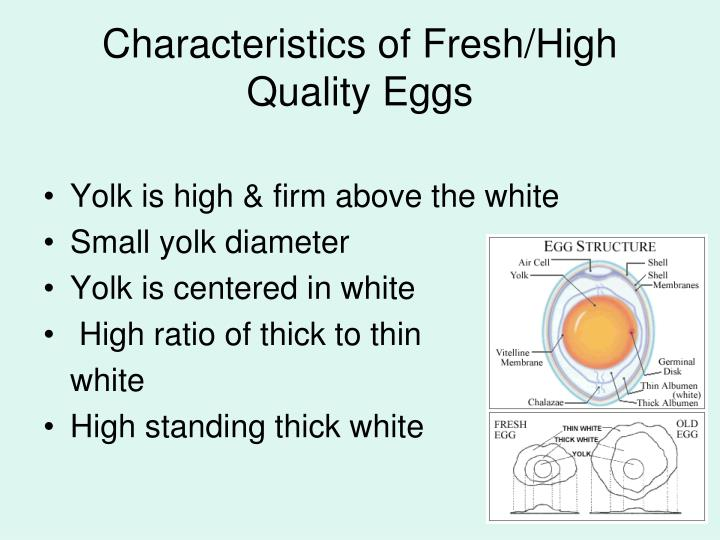 Characteristics of Fresh/High Quality Eggs