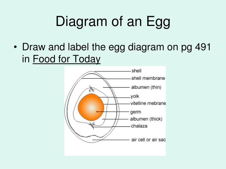 Diagram of an Egg
