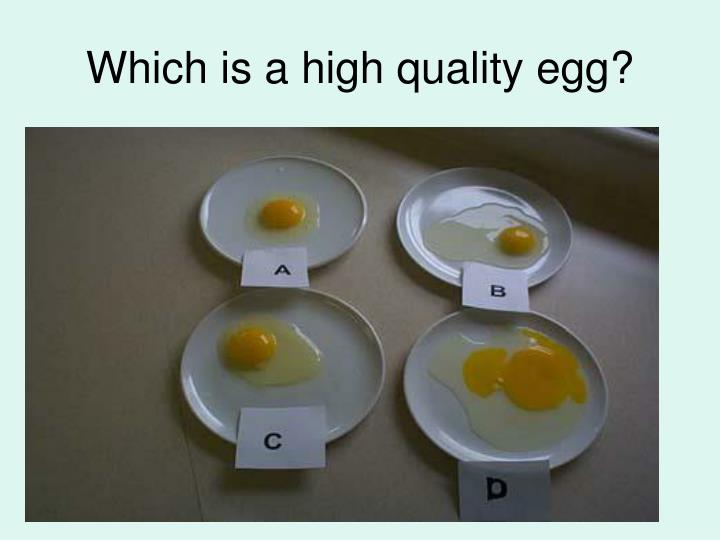 Which is a high quality egg?