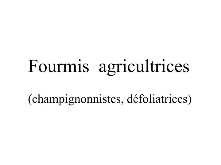 Fourmis  agricultrices
