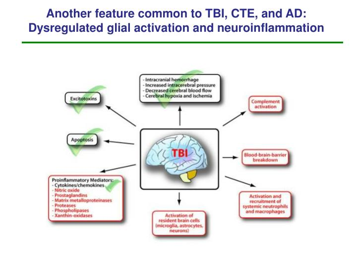 Another feature common to TBI, CTE, and AD:   Dysregulated glial activation and neuroinflammation