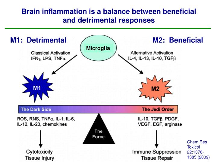 Brain inflammation is a balance between beneficial and detrimental responses