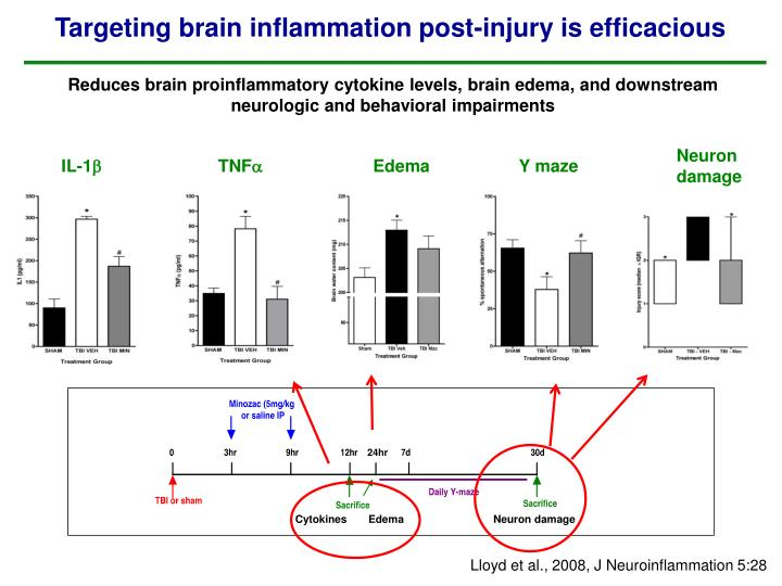 Reduces brain proinflammatory cytokine levels, brain edema, and downstream neurologic and behavioral impairments