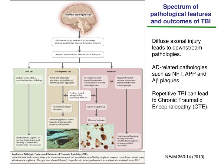 Spectrum of pathological features and outcomes of TBI